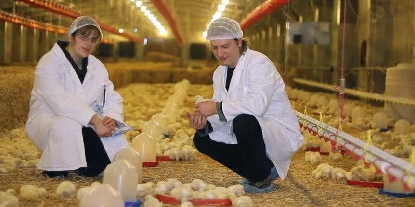 Mahasiswa di Peternakan Ayam